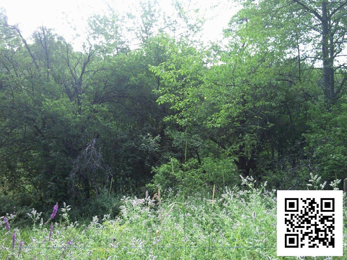 http://www.petkovstudio.com/bg/wp-content/uploads/2016/08/page_15-1200x900.jpg